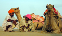 Camels and their owners, Rajasthan, India