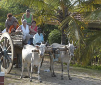 Tourists try a bullock cart ride, India
